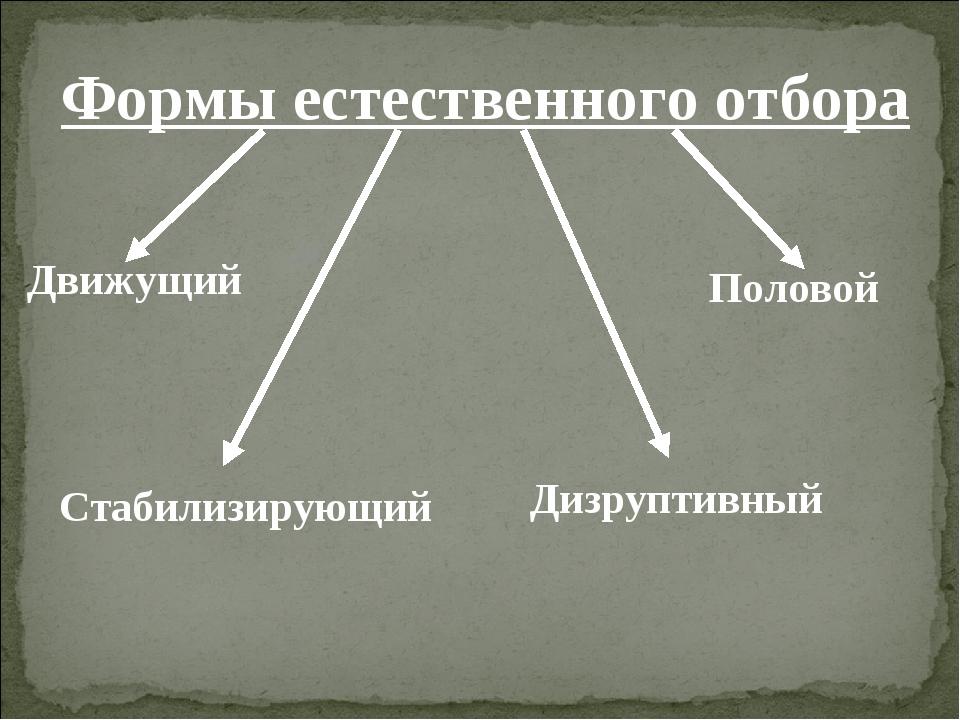 Формы естественного отбора Движущий Стабилизирующий Дизруптивный Половой