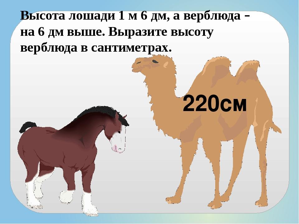 Высота лошади 1 м 6 дм, а верблюда – на 6 дм выше. Выразите высоту верблюда в...