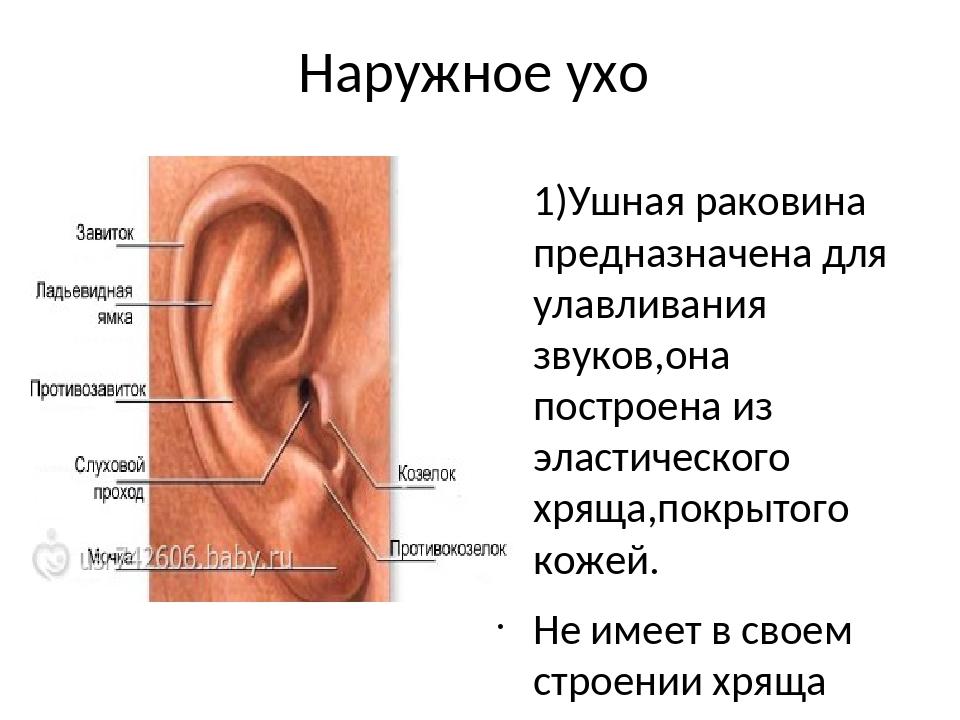 Ушная раковина болит биохимическом липопротеиды анализе крови в