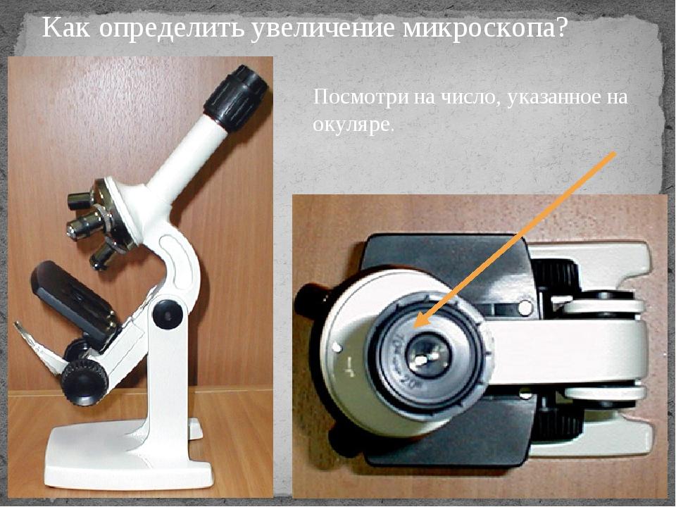 Как определить увеличение микроскопа? Посмотри на число, указанное на окуляре.