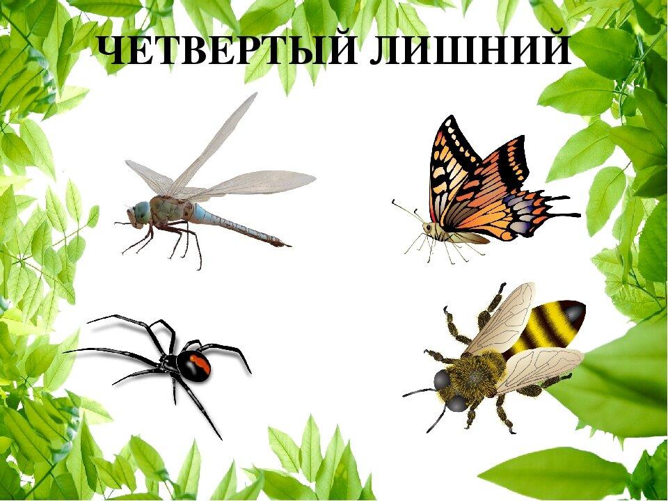Картинки на одну тему насекомые овладели высотой