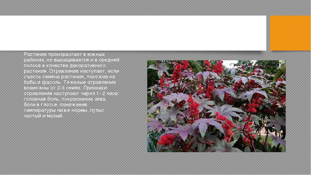 Ядовитые растения беларуси картинками фотографии