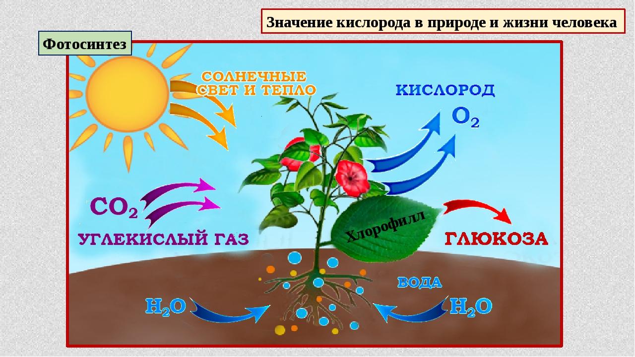 фотосинтез и его значение в жизни растений спальню готовом виде