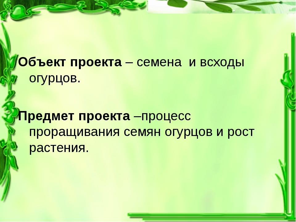Объект проекта – семена и всходы огурцов. Предмет проекта –процесс проращиван...