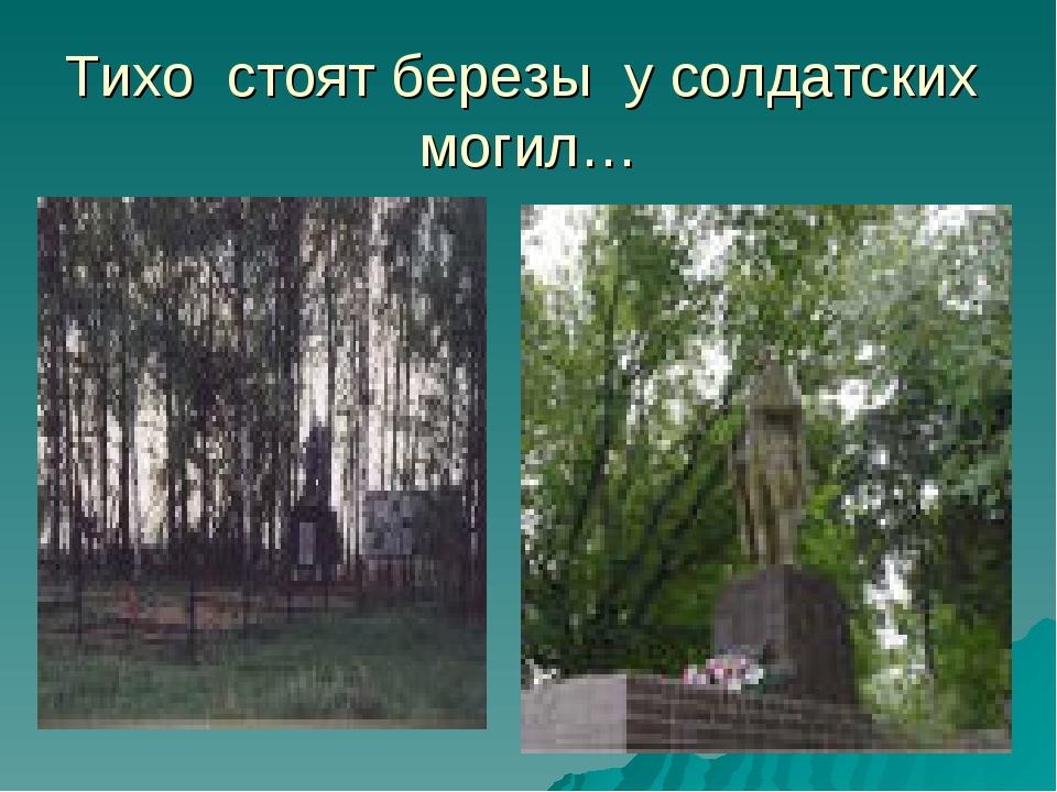 Тихо стоят березы у солдатских могил…