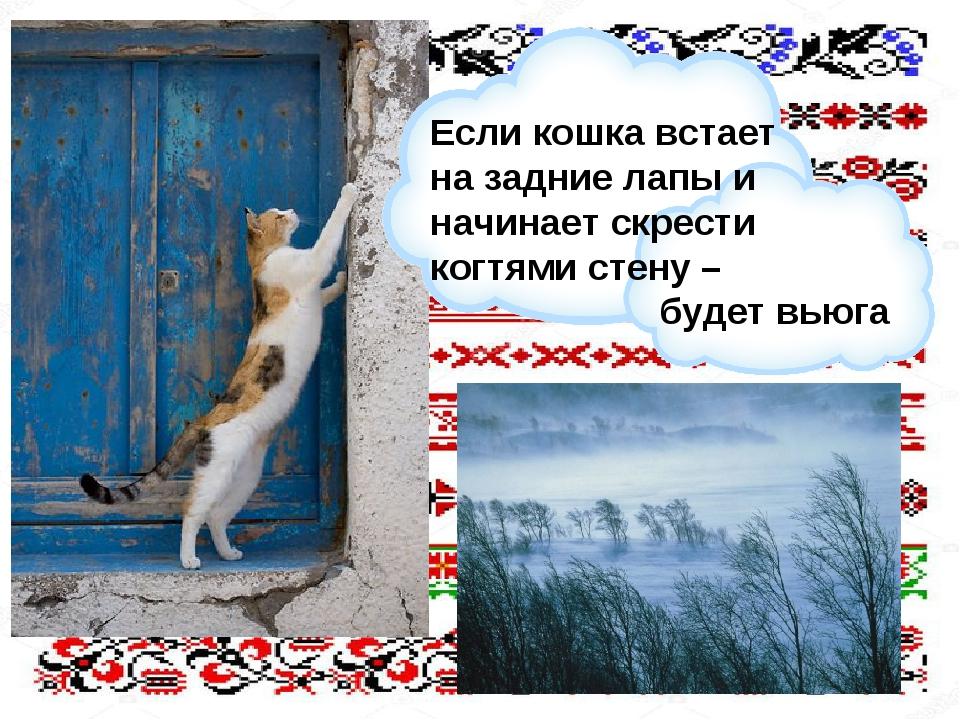 Если кошка встает на задние лапы и начинает скрести когтями стену – будет вьюга
