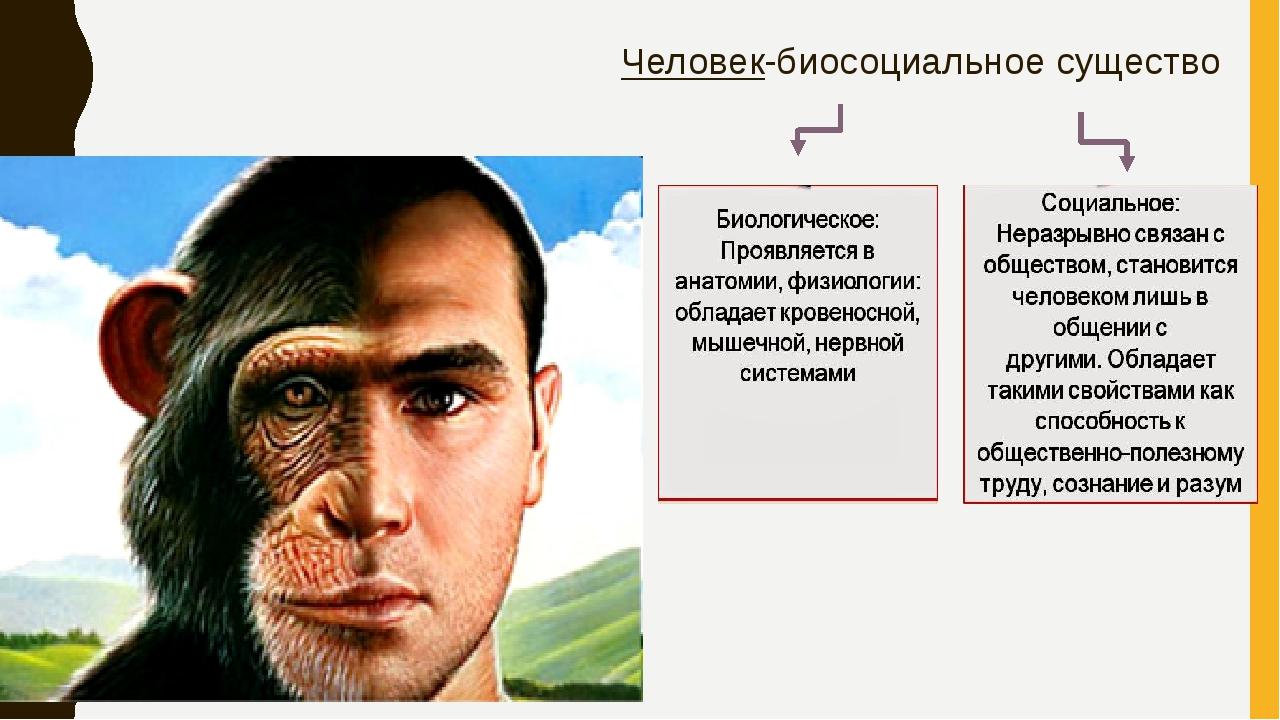 Человек-биосоциальное существо