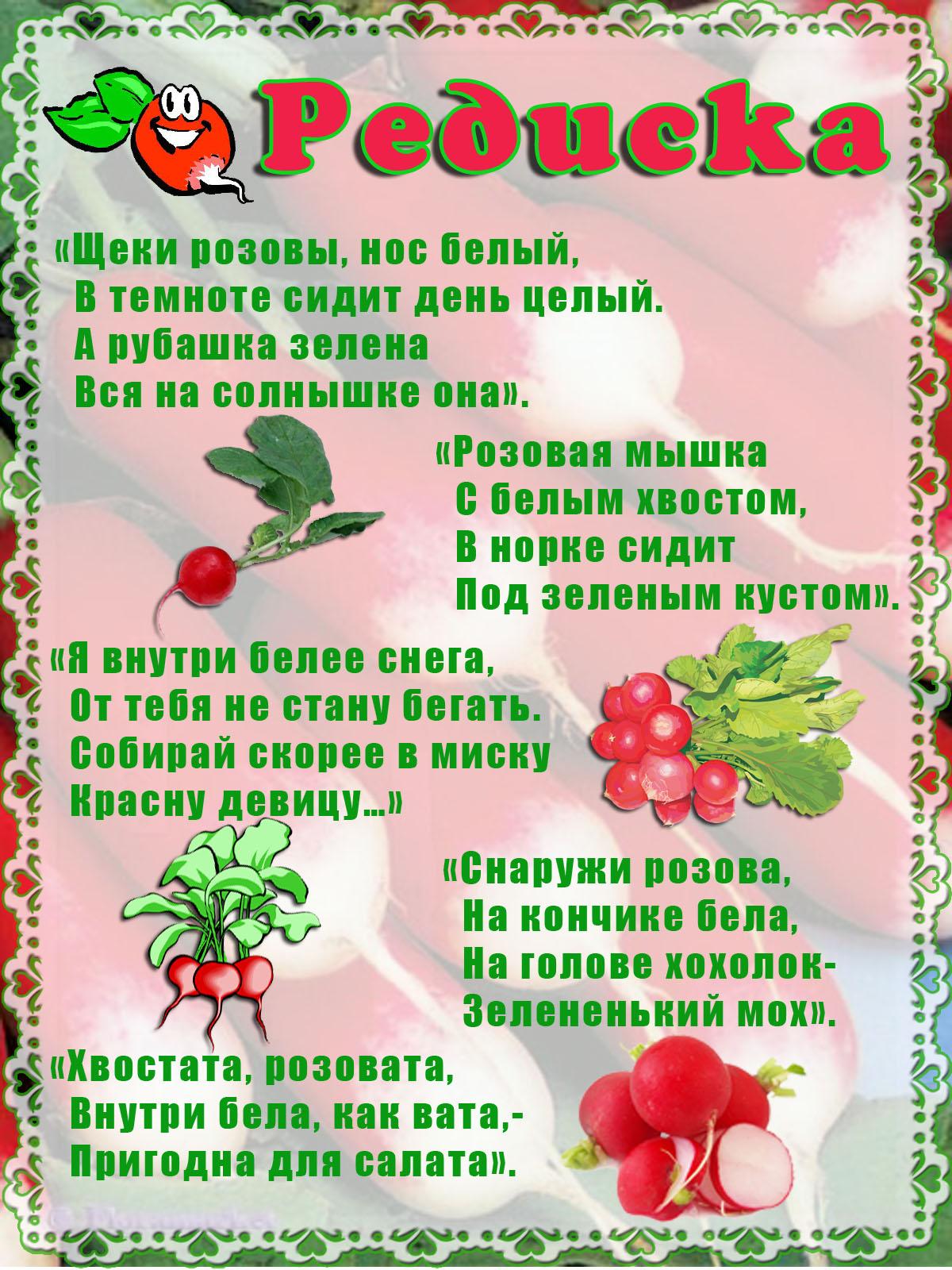 поздравление с овощами на день рождения про редиску нижнем новгороде