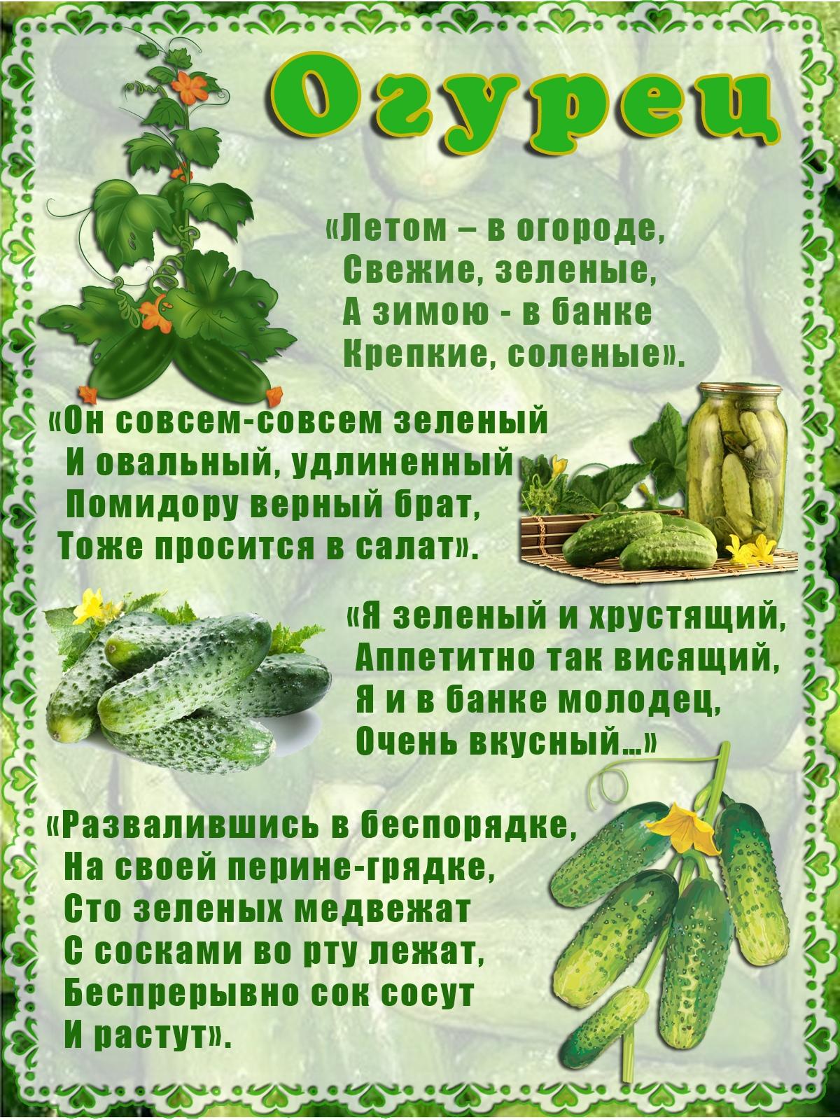 пословицы про овощи с картинками лечебном корпусе