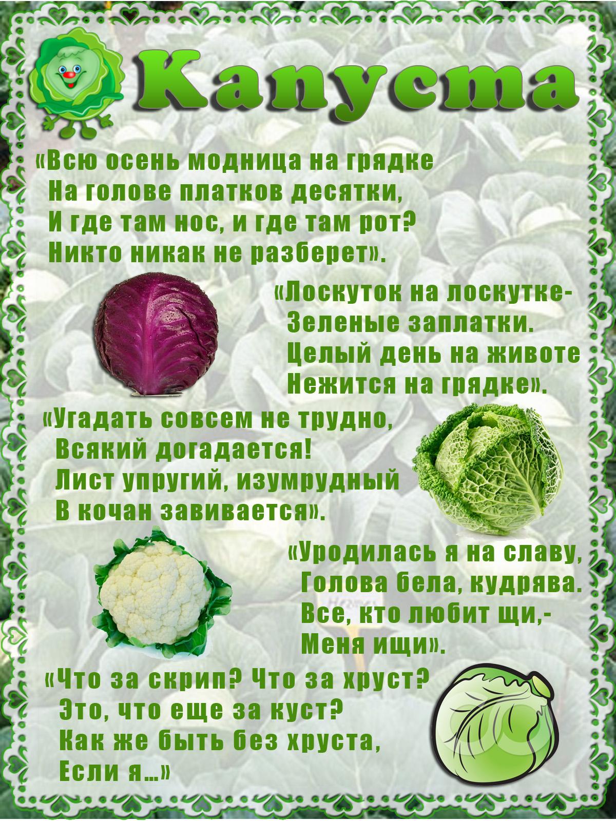 интересный пословицы про овощи с картинками дерева, обивка