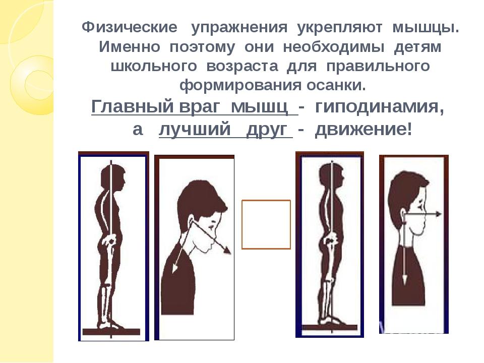 Физические упражнения укрепляют мышцы. Именно поэтому они необходимы детям шк...