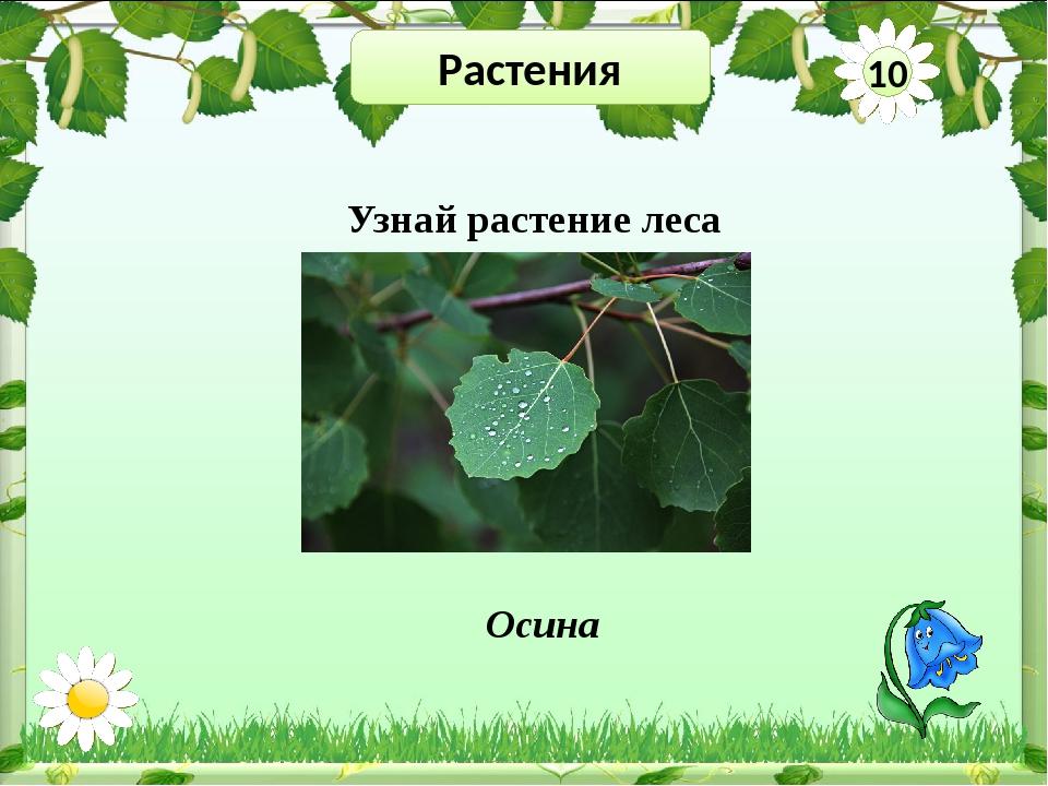 Растения 30 Существует много легенд о происхождении этого цветка. Но я хочу р...