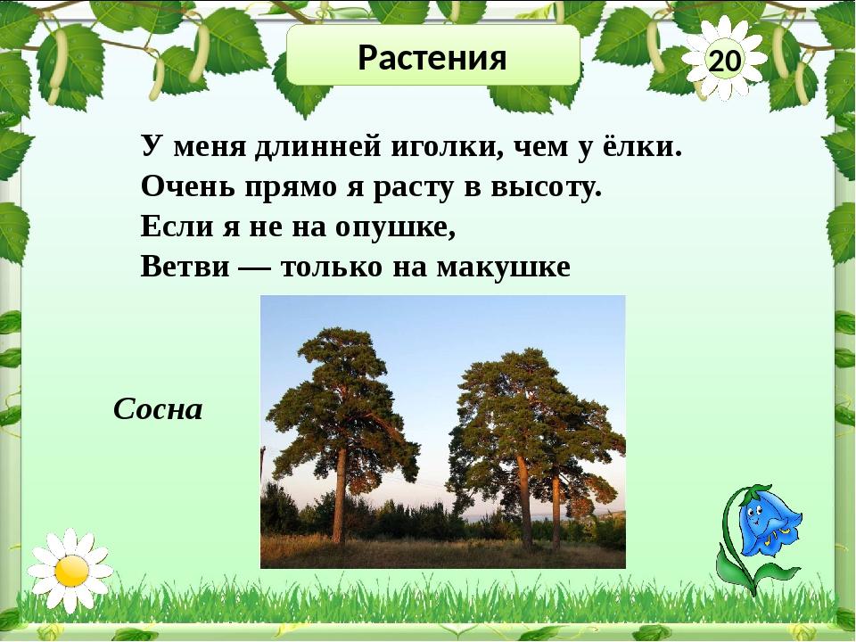 Растения 40 Цветок какого растения изображён на гербе Приволжского района и п...