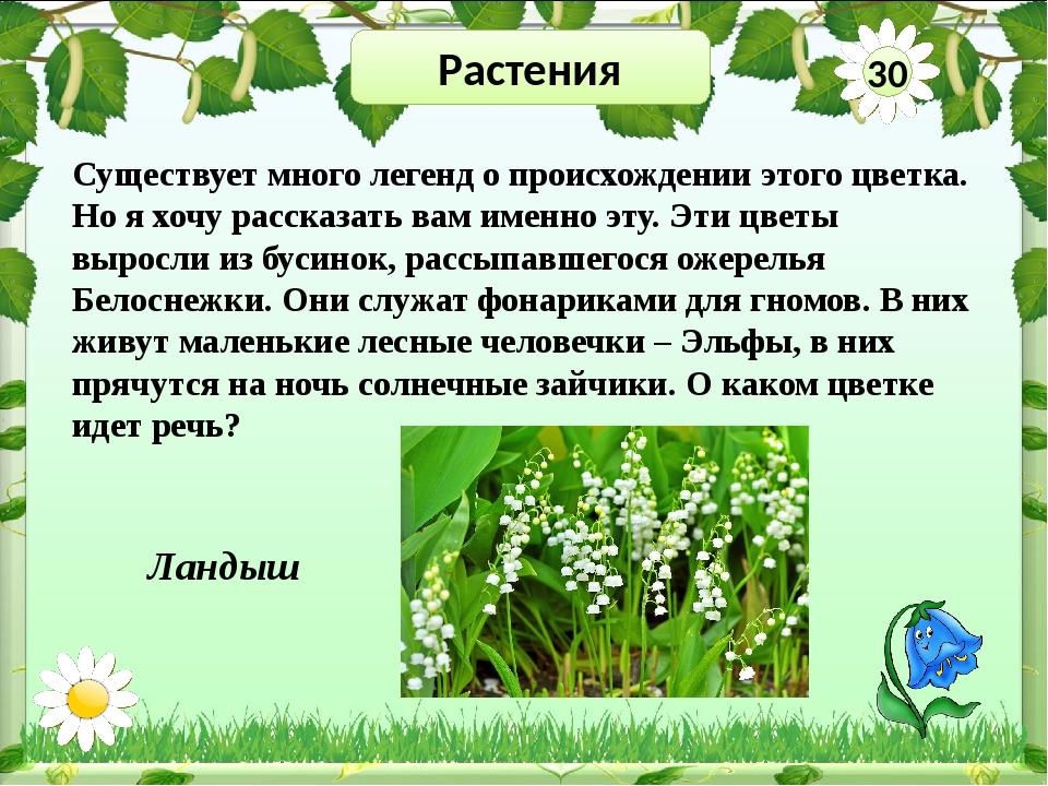 Растения 50 Разгадай ребусы и узнай растения нашего края Ромашка Берёза Тополь