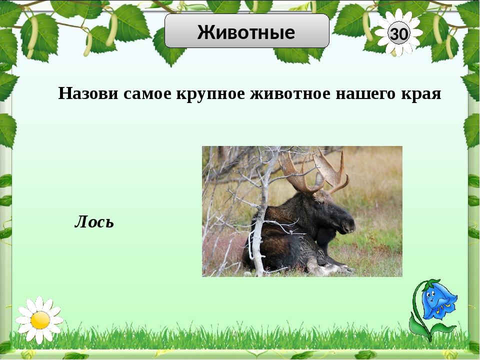 Животные 50 Сова Заяц Свиристель Медведь