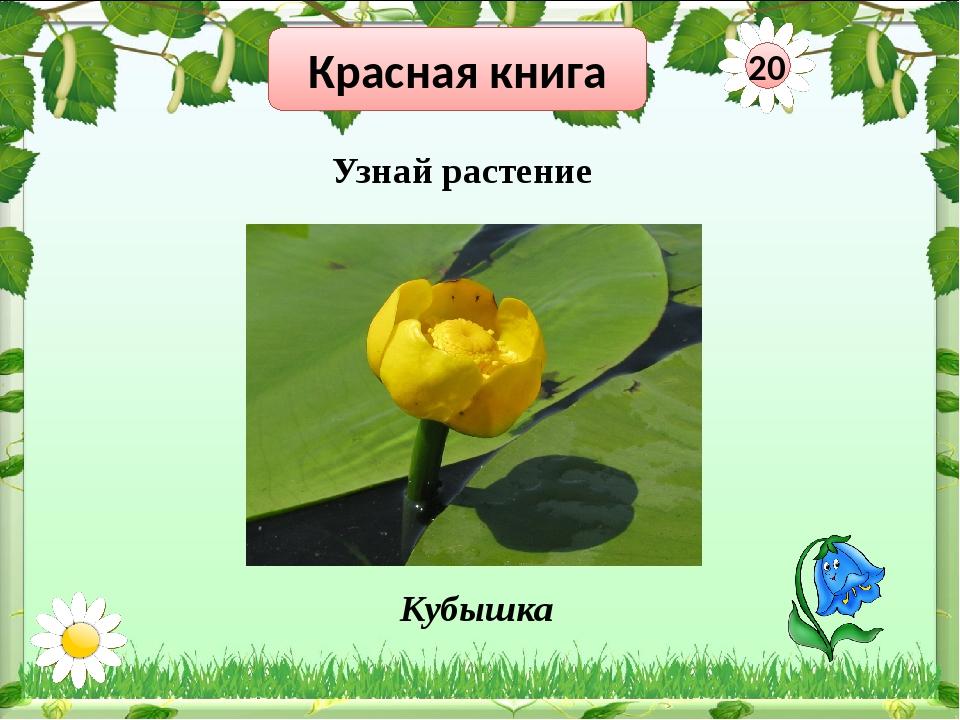 Красная книга 40 Узнай растения Кубышка Морошка Венерин башмачок
