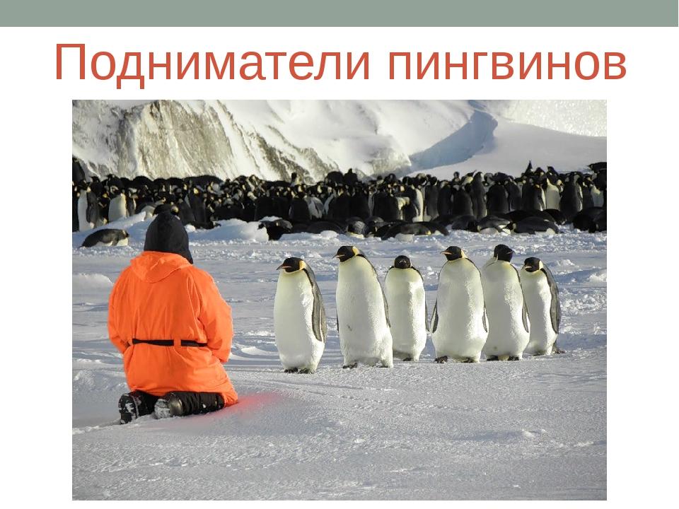 Подниматели пингвинов