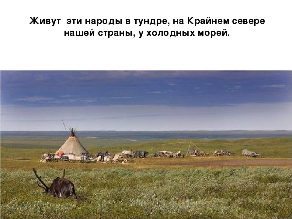 Живут эти народы в тундре, на Крайнем севере нашей страны, у холодных морей.