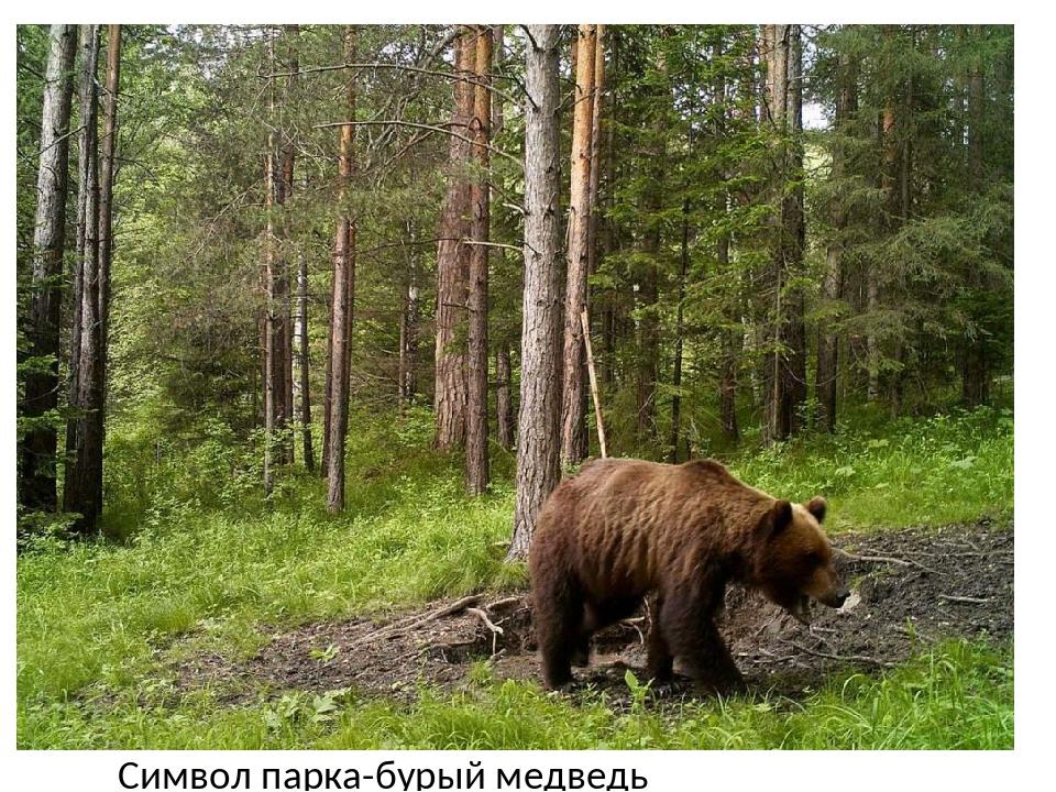 Символ парка-бурый медведь