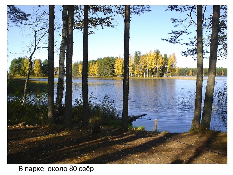 В парке около 80 озёр