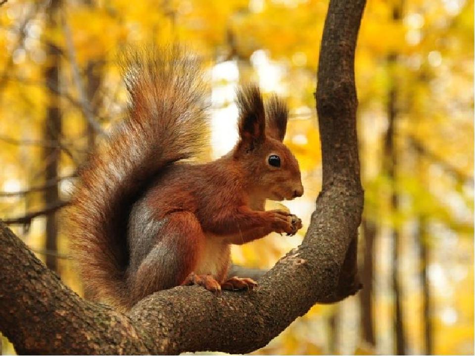 фото белки на дереве осень иголка, поднесенная