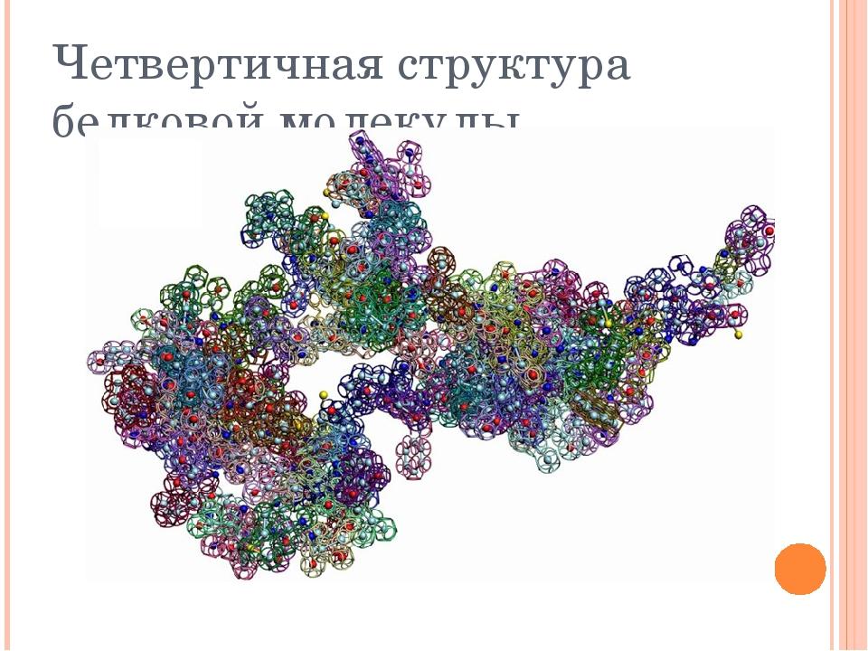 Четвертичная структура белковой молекулы