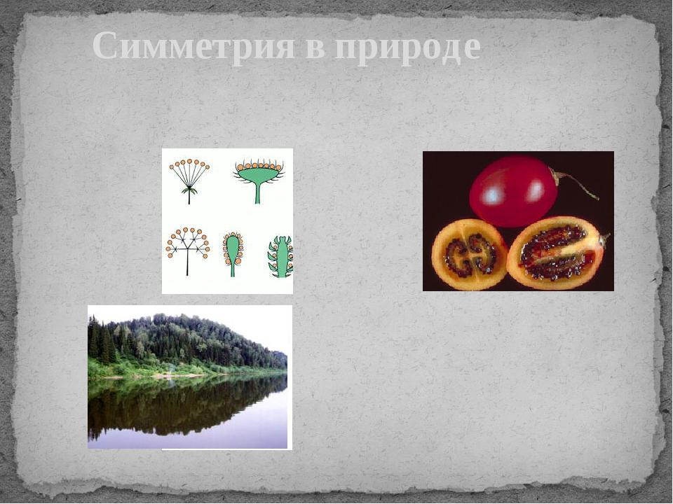 трио-комфорт переносная симметрия картинки в природе того чтобы съесть