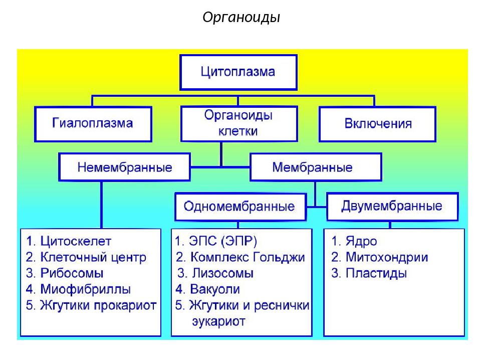 Органоиды