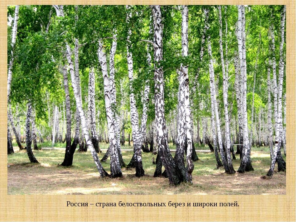 Россия – страна белоствольных берез и широки полей.