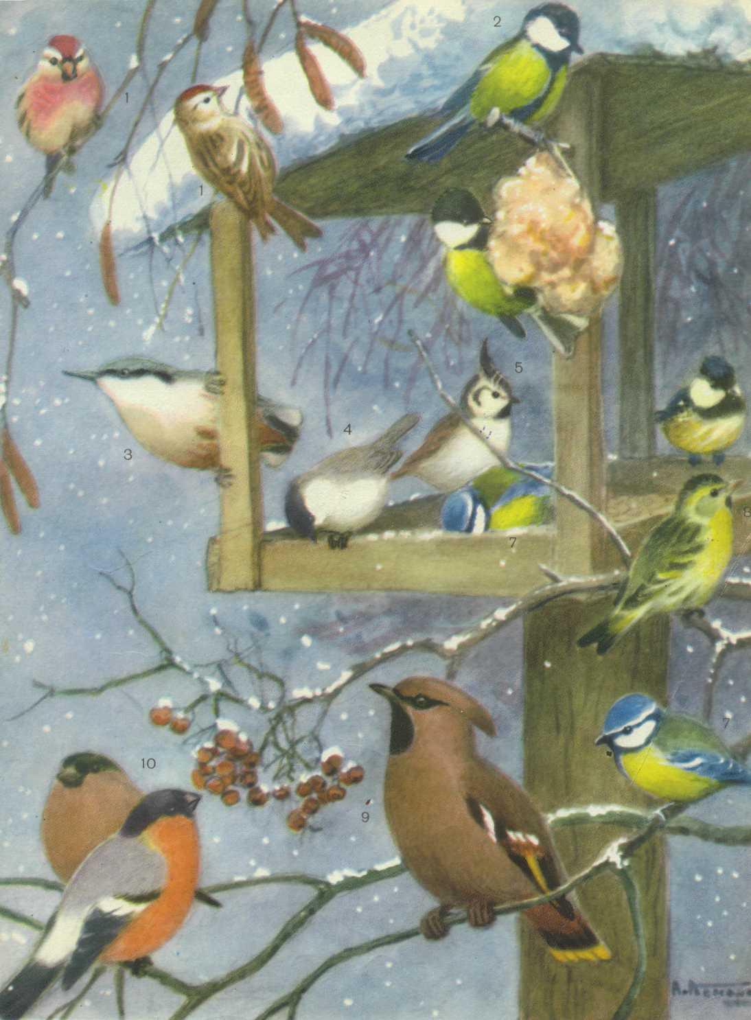 Про, картинки птицы зимой для детского сада