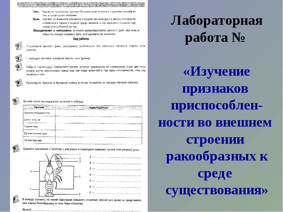 Лабораторная работа № «Изучение признаков приспособлен- ности во внешнем стро...