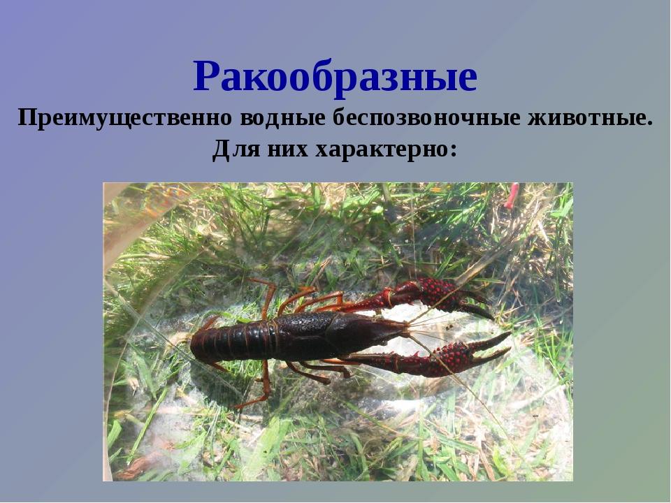 Ракообразные Преимущественно водные беспозвоночные животные. Для них характер...