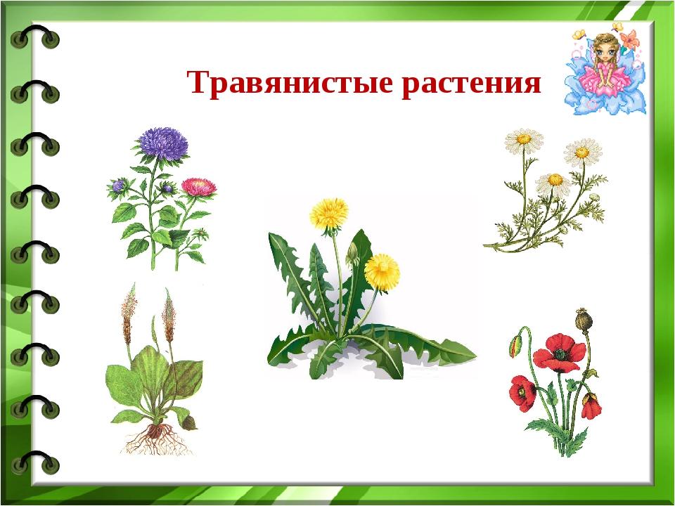 травянистые растения названия с картинками кажется, что едешь