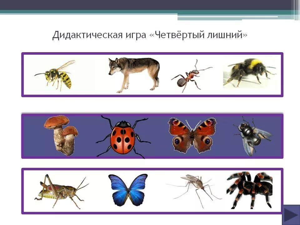 недели картинка четвертый лишний насекомые отличается узо
