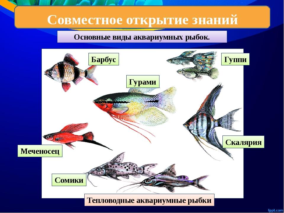 Аквариумные рыбки в картинках с названием