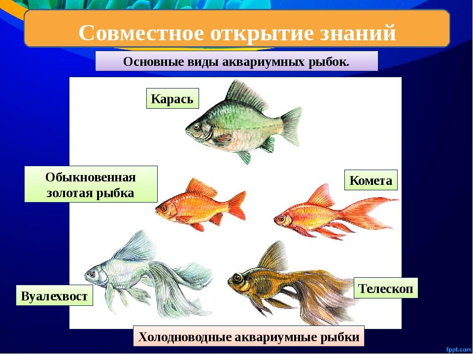 аквариумные рыбки с названиями в картинках анализ позволяет определить