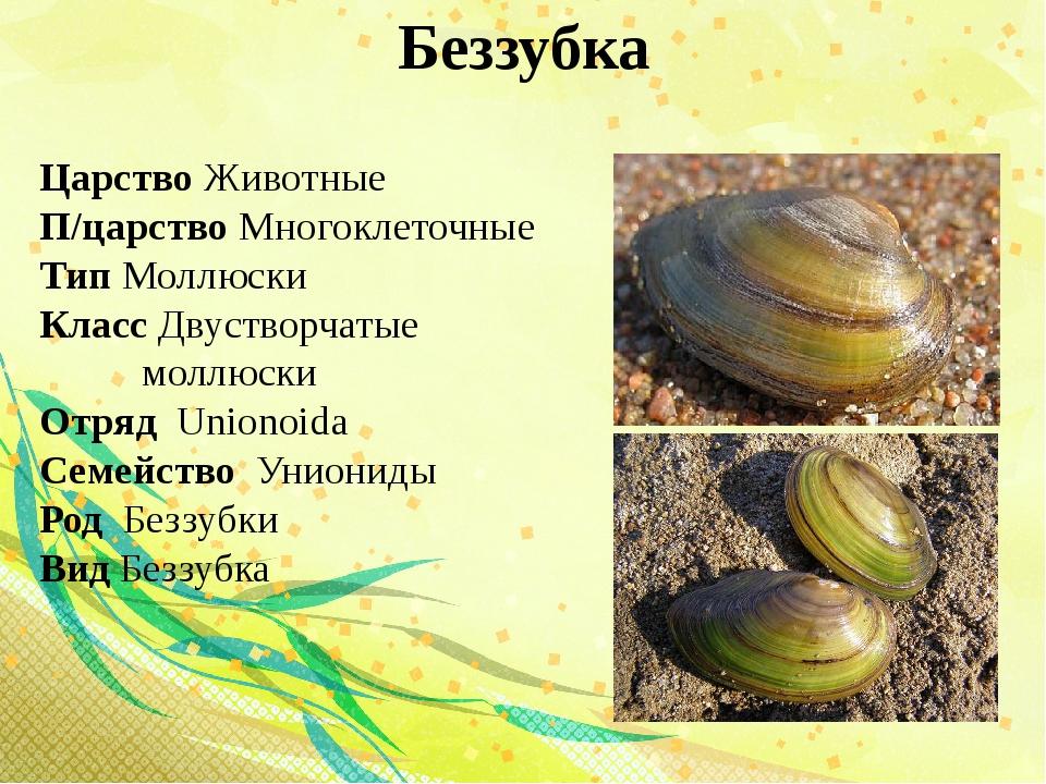 Беззубка Царство Животные П/царство Многоклеточные Тип Моллюски Класс Двуство...