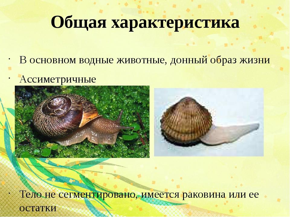 Общая характеристика В основном водные животные, донный образ жизни Ассиметри...
