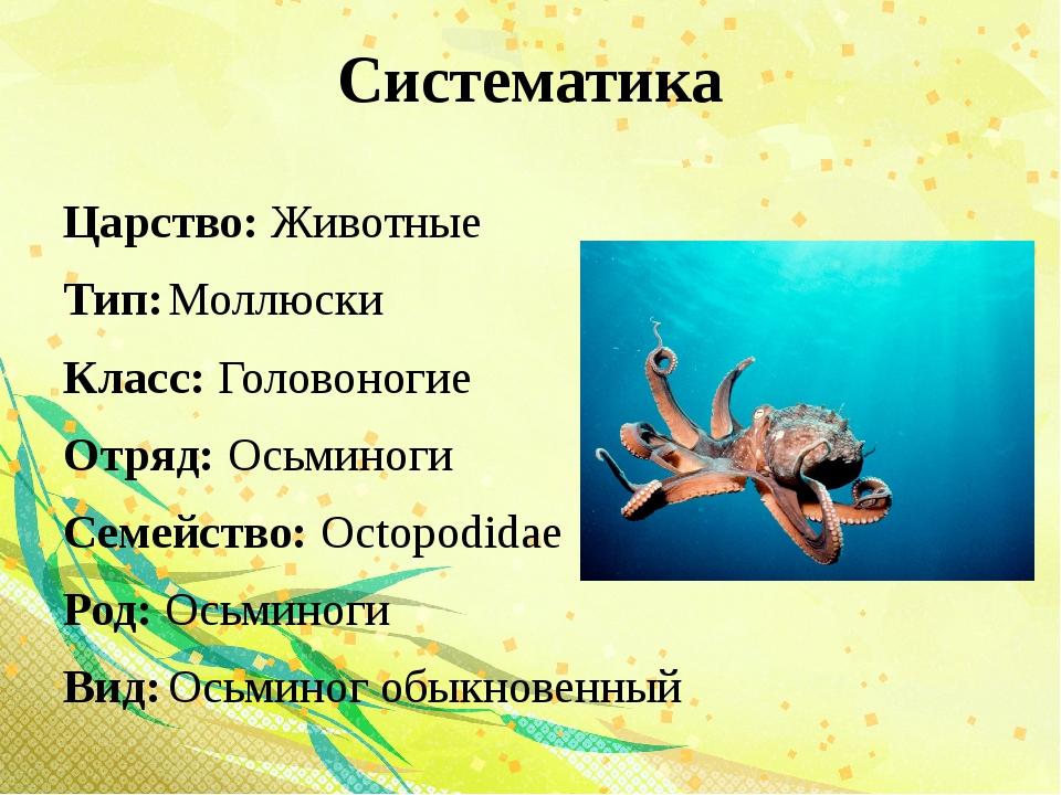 Систематика Царство: Животные Тип:Моллюски Класс: Головоногие Отряд: Осьмино...