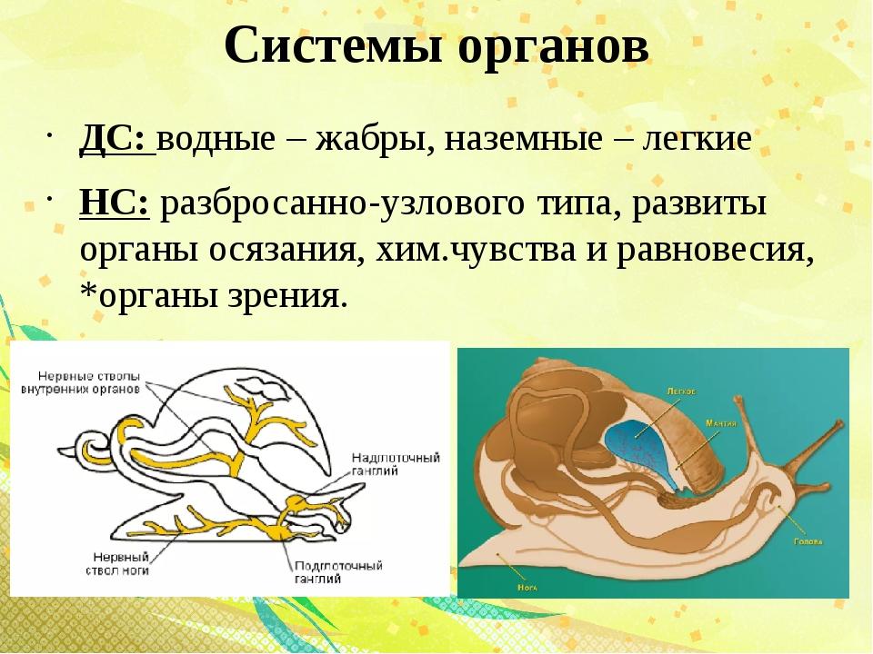 Системы органов ДС: водные – жабры, наземные – легкие НС: разбросанно-узловог...