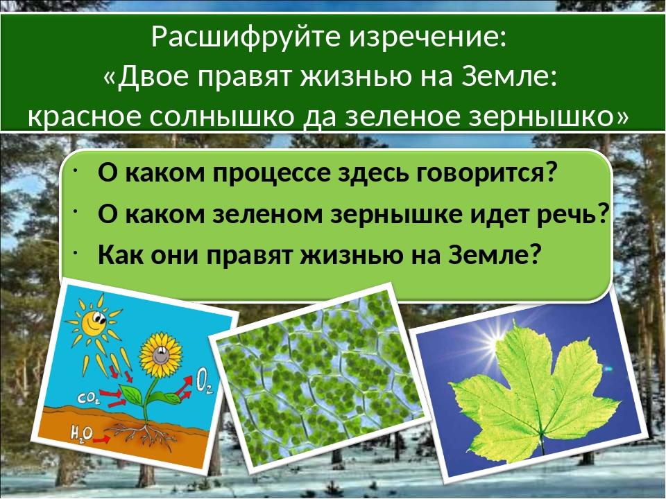 О каком процессе здесь говорится? О каком зеленом зернышке идет речь? Как он...