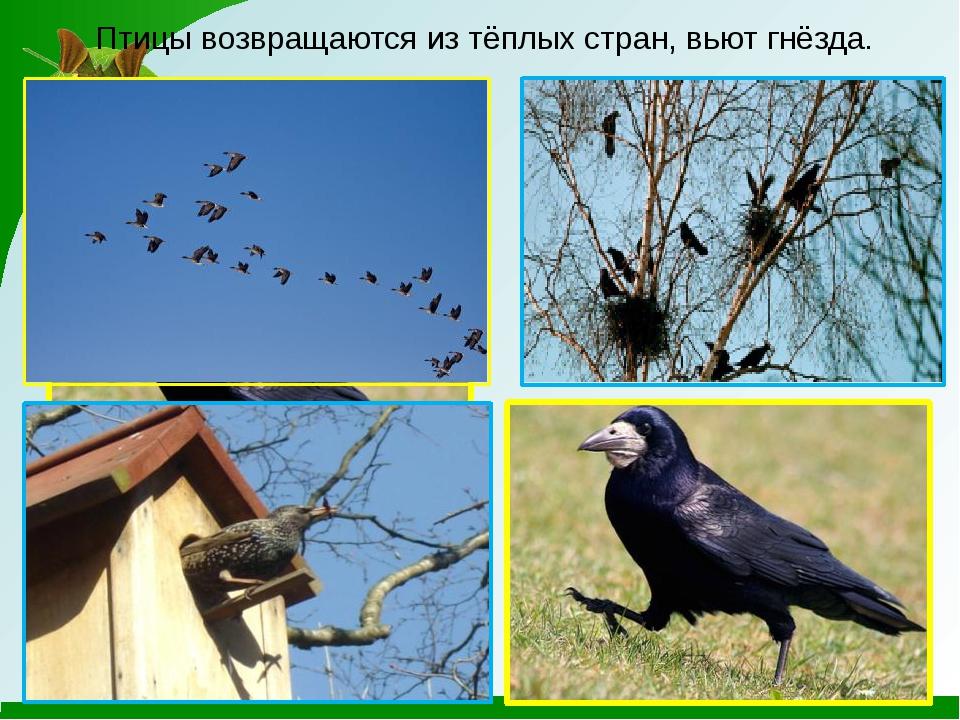 Весной прилетают птицы картинки с названиями