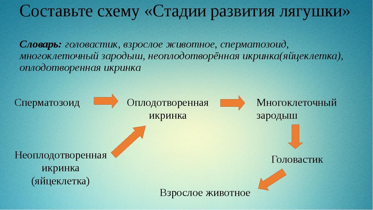 Составьте схему «Стадии развития лягушки» Словарь: головастик, взрослое живот...
