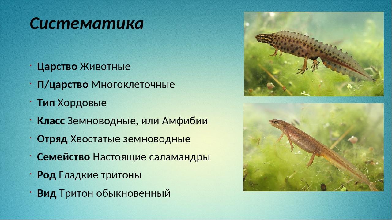 Систематика Царство Животные П/царство Многоклеточные Тип Хордовые Класс Земн...