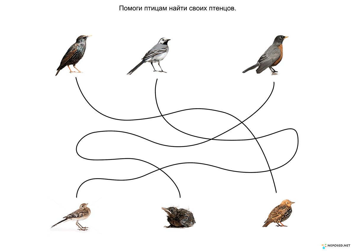 инженерных игры на тему перелетные птицы картинки помощью таких