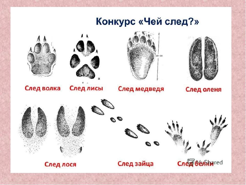 Следы птиц и животных картинки для детей с подписями