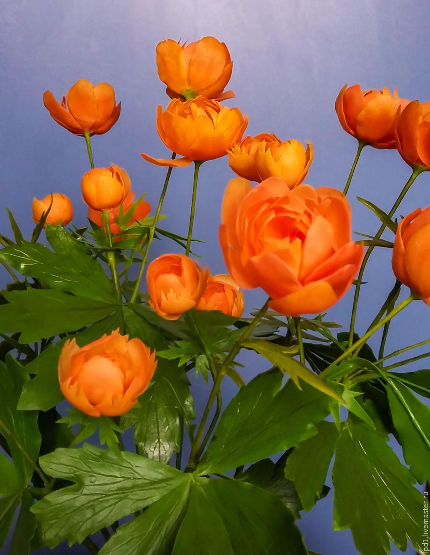 хотел цветы жарки сибирские фото инновационной подсветке освещению