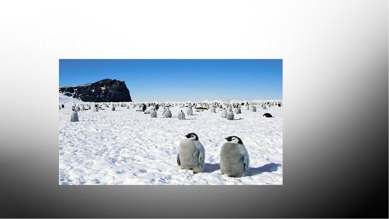 Как удается антарктическим пингвинам выживать при -60 С ?