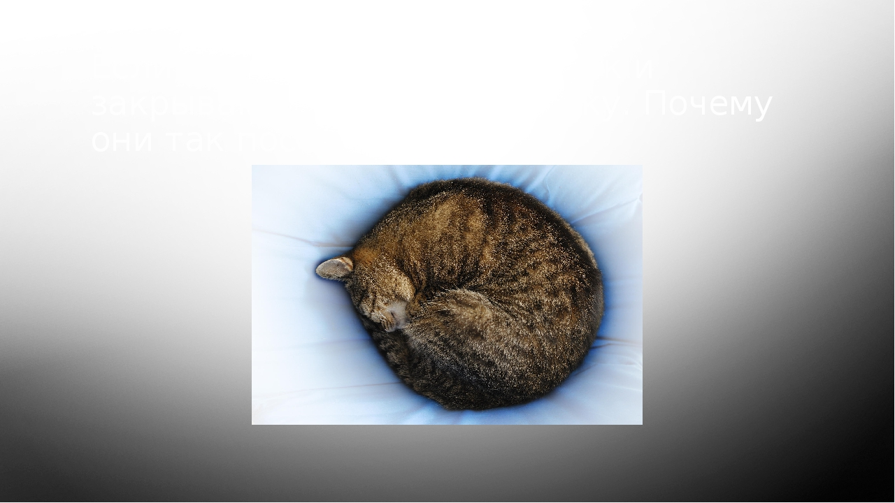 Если кошки ложатся в клубок и закрывают хвостом мордочку. Почему они так пост...
