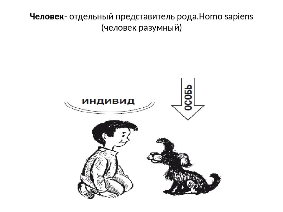 Человек- отдельный представитель рода.Homo sapiens (человек разумный)